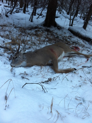 Aaron P - Whitetail, November 18, 2013