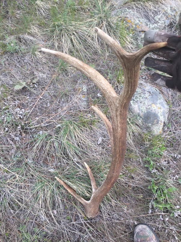 Shed Hunting 3