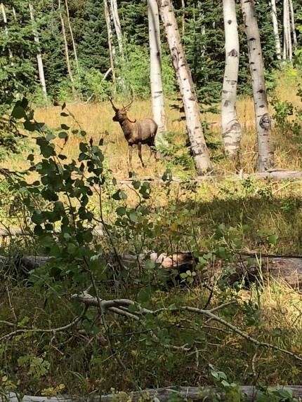 Aaron P - Cow Elk Sep 9, 2018 (1)