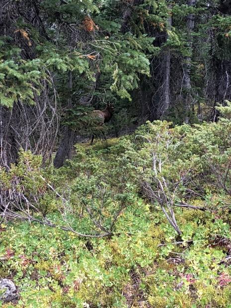 Aaron P - Cow Elk Sep 9, 2018 (3)
