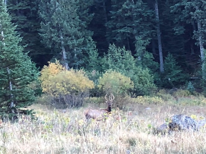 Aaron P - Cow Elk Sep 9, 2018 (5)