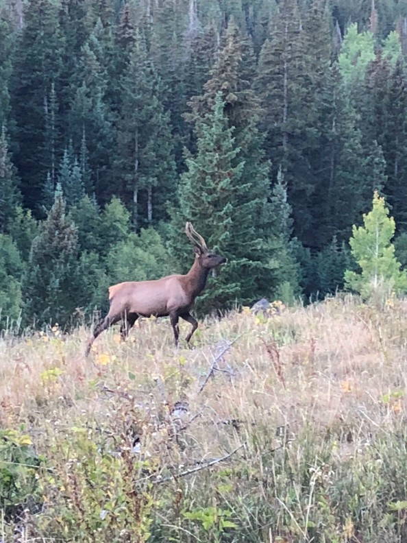 Aaron P - Cow Elk Sep 9, 2018 (7)