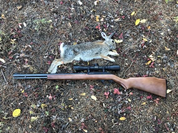 Bunny Hunt - Oct 4, 2018 (2)
